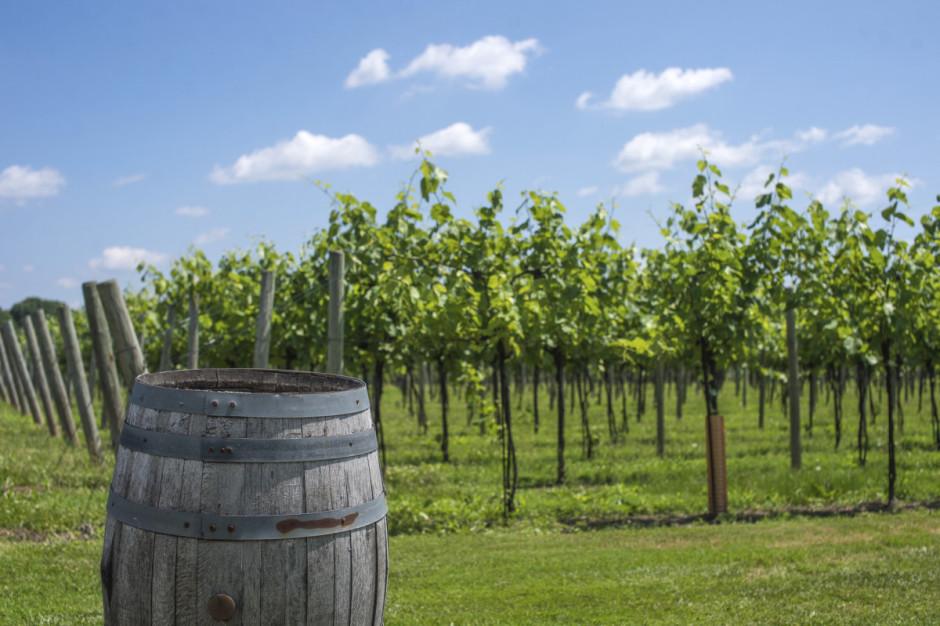 Generic Vineyard