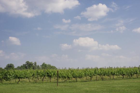 bucks county vineyard