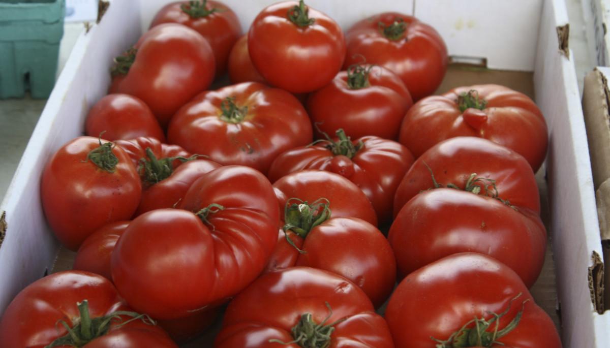 farm market tomatoes