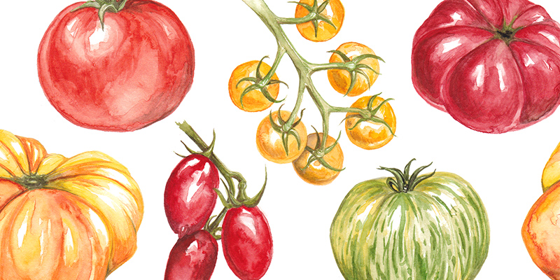 painting-tomatoes